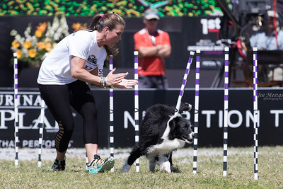 2017_Purina_Competition-14
