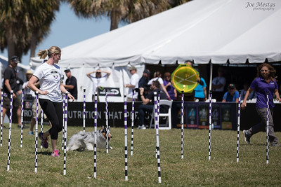 2017_Purina_Competition-9