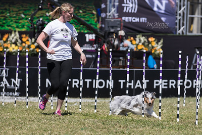 2017_Purina_Competition-4