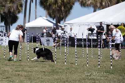 2017_Purina_Competition-17