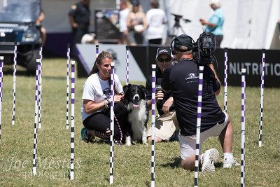 2017_Purina_Competition-18