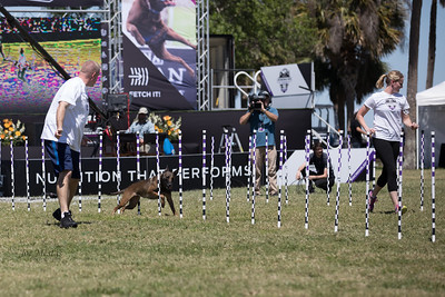 2017_Purina_Competition-8