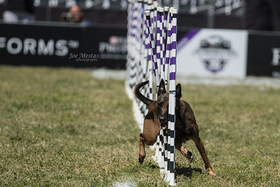 2017_Purina_Competition-3