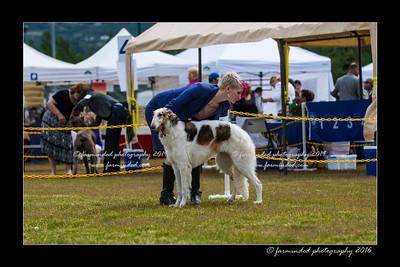 DS5_7333-12x18-06_2016-Dog_Show-W
