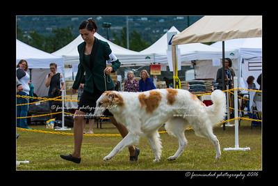 DS5_7327-12x18-06_2016-Dog_Show-W