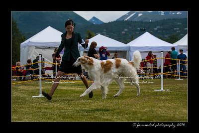 DS5_7393-12x18-06_2016-Dog_Show-W