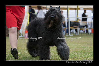 06/25/2016 - AKC - All Breed Show
