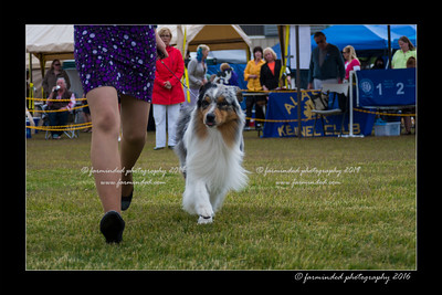 DS5_9312-12x18-06_2016-Dog_Show