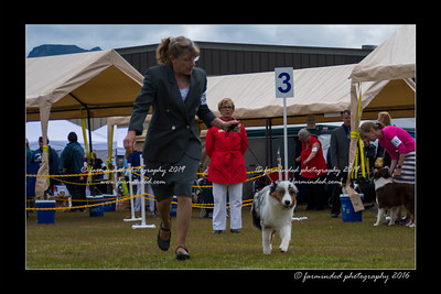 DS5_9391-12x18-06_2016-Dog_Show