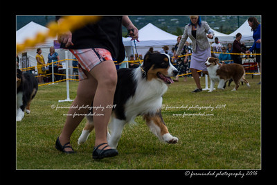 DS5_9327-12x18-06_2016-Dog_Show