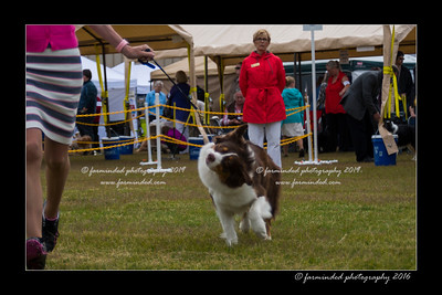 DS5_9402-12x18-06_2016-Dog_Show