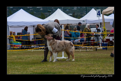 DS5_9440-12x18-06_2016-Dog_Show