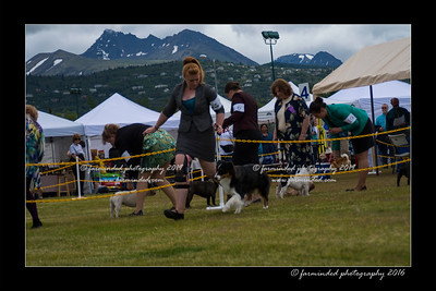 DS5_9350-12x18-06_2016-Dog_Show