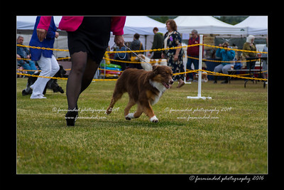 DS5_9464-12x18-06_2016-Dog_Show