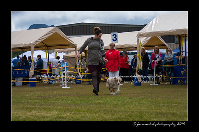 DS5_9423-12x18-06_2016-Dog_Show