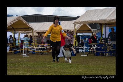 DS5_9289-12x18-06_2016-Dog_Show