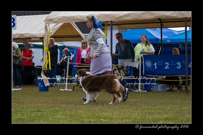 DS5_9336-12x18-06_2016-Dog_Show