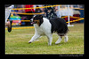 DS5_9742-12x18-06_2016-Dog_Show