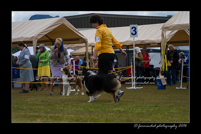 DS5_9332-12x18-06_2016-Dog_Show