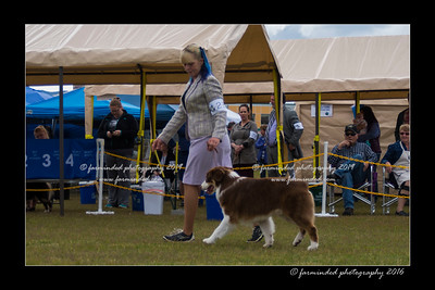 DS5_9334-12x18-06_2016-Dog_Show