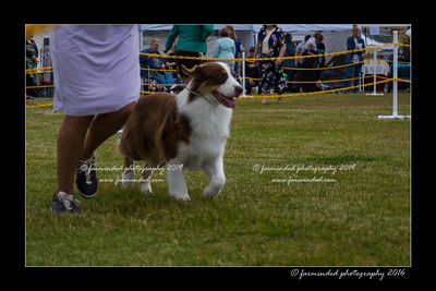 DS5_9331-12x18-06_2016-Dog_Show