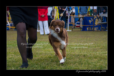DS5_9349-12x18-06_2016-Dog_Show