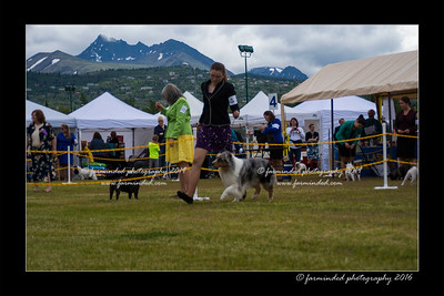 DS5_9309-12x18-06_2016-Dog_Show