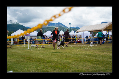 DS5_9298-12x18-06_2016-Dog_Show