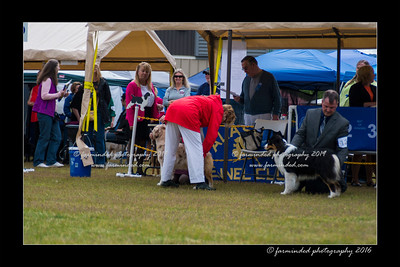 DS5_9421-12x18-06_2016-Dog_Show