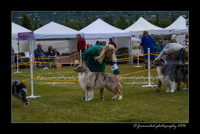 DS5_9486-12x18-06_2016-Dog_Show
