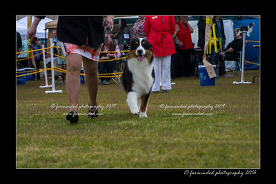 DS5_9306-12x18-06_2016-Dog_Show