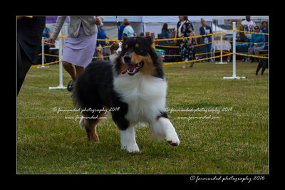 DS5_9328-12x18-06_2016-Dog_Show