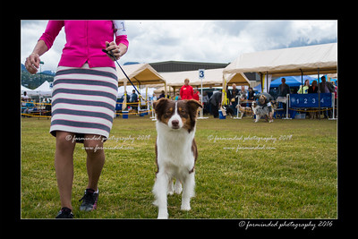 DS5_9405-12x18-06_2016-Dog_Show