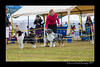 DS5_9755-12x18-06_2016-Dog_Show