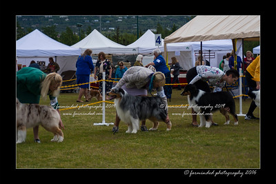 DS5_9488-12x18-06_2016-Dog_Show