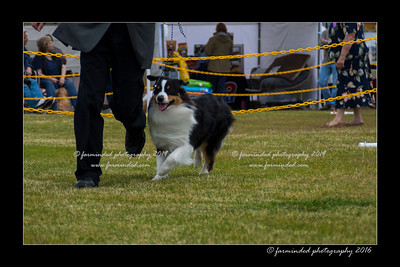 DS5_9471-12x18-06_2016-Dog_Show