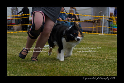 DS5_9460-12x18-06_2016-Dog_Show