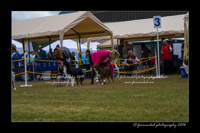 DS5_9448-12x18-06_2016-Dog_Show
