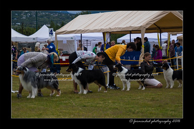 DS5_9490-12x18-06_2016-Dog_Show