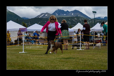 DS5_9339-12x18-06_2016-Dog_Show