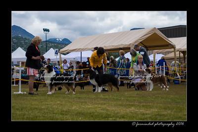 DS5_9323-12x18-06_2016-Dog_Show