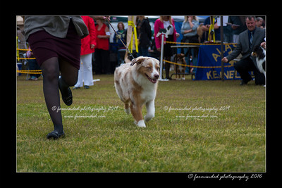 DS5_9431-12x18-06_2016-Dog_Show