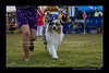DS5_9313-12x18-06_2016-Dog_Show