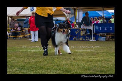 DS5_9290-12x18-06_2016-Dog_Show