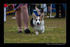 DS5_9853-12x18-06_2016-Dog_Show