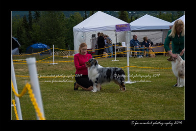 DS5_9484-12x18-06_2016-Dog_Show