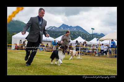 DS5_9407-12x18-06_2016-Dog_Show