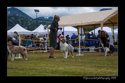 DS5_9443-12x18-06_2016-Dog_Show