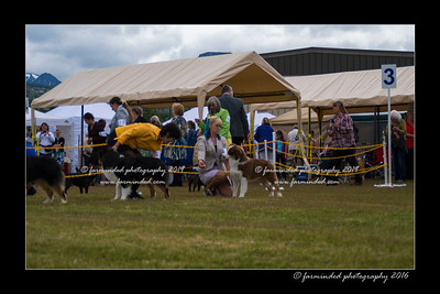 DS5_9325-12x18-06_2016-Dog_Show