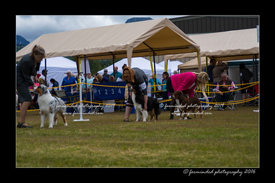DS5_9446-12x18-06_2016-Dog_Show